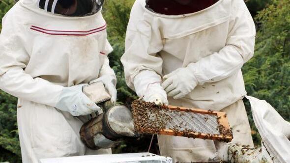 Arı zehrinin gramı 400 lira