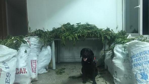 Narkotik köpeği Puslu tepki verdi, uyuşturucu bulundu