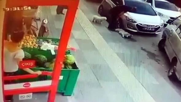 Sokak köpeğine tekme attı