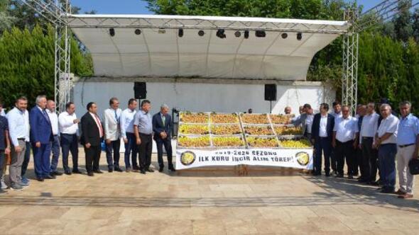 Nazillide sezonun ilk kuru inciri kilosu 250 TLden satıldı