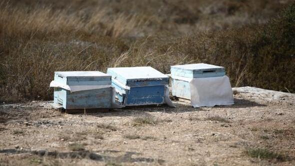 Kovan çalarken arı sokması sonucu öldü