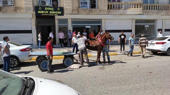 Sahibinden kaçan at, iş yerinin camını kırıp, 5 araca zarar verdi