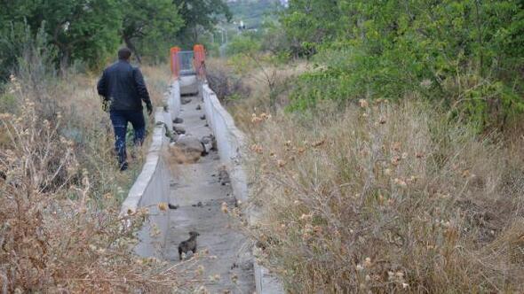 Kanala düşen 5 yavru köpeği belediye çalışanları kurtardı