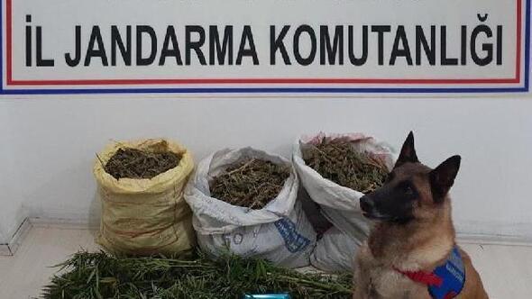 Denizlide uyuşturucuya 1 tutuklama