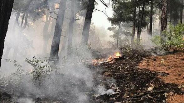 Yıldırımın düştüğü ormanda 1 hektarlık alan zarar gördü