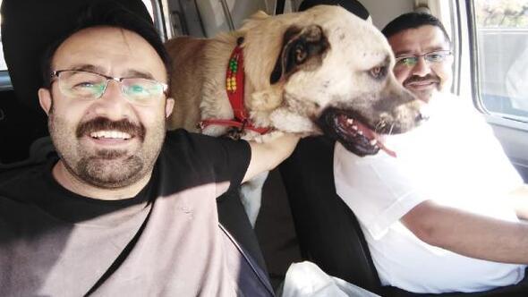 Kangal cinsi Paşanın en büyük tutkusu araba ile gezmek