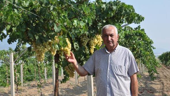 Başkan Köse, üzüm üreticilerini dolandırıcılık olaylarına karşı uyardı