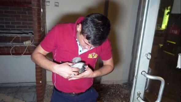 Kanadı kırık güvercini itfaiye kurtardı