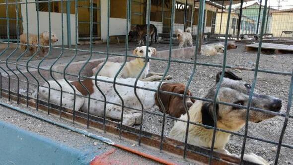 Tarsusta bir ayda 476 sokak hayvanına tıbbi müdahalede bulundu