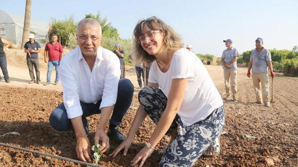 Mezitli'de enginar üretimine başlandı
