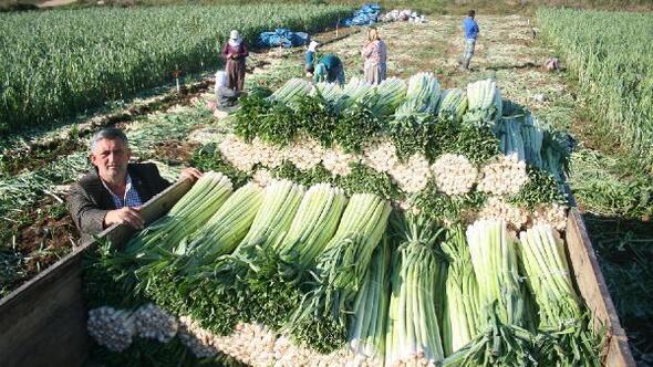 Yenişehirli çiftçilerden kışlık sebze sezonuna umutlu başlangıç