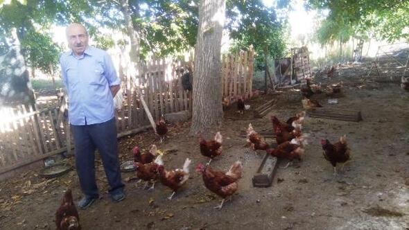 Emekli işçi kurduğu tavuk çiftliğinde organik yumurta üretiyor