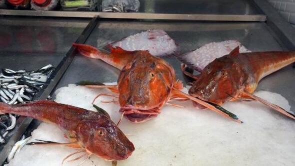 5 kiloluk kırlangıç balığı, 500 TLye satılıyor