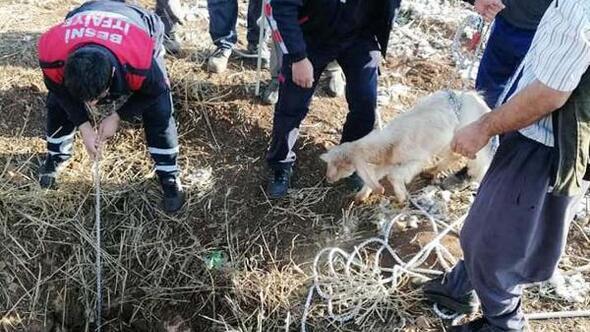 Kuyuya düşen 3 koyun kurtarıldı