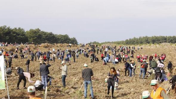 Çanakkalede 205 bin fidan toprakla buluşturuldu