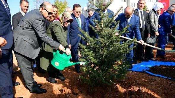 Trabzonda sabun ağacı fidanları toprakla buluşturuldu