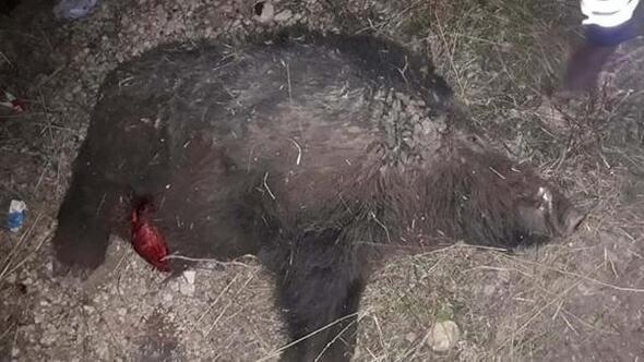 Adıyaman'da otomobil domuz sürüsüne çarptı