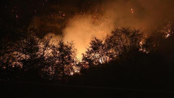 Anız ateşi ormanı yaktı