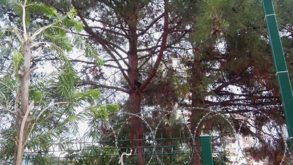 Kozanda ağaçta mahsur kalan kedi kurtarıldı