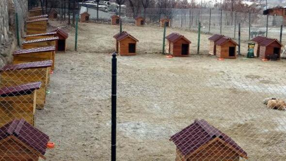 Ercişe sokak hayvanları için kulübeler gönderildi