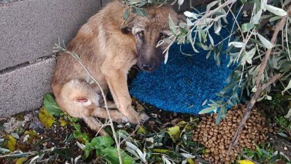 Arabanın çarptığı köpek, tedaviye alındı