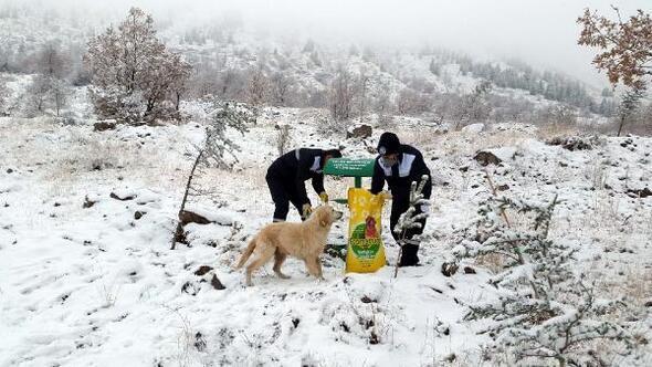 Talas Belediyesinden hayvanlar için yem