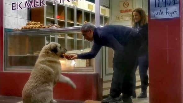 Sokak köpeği, acıkınca uğradığı fırında karnını doyuruyor