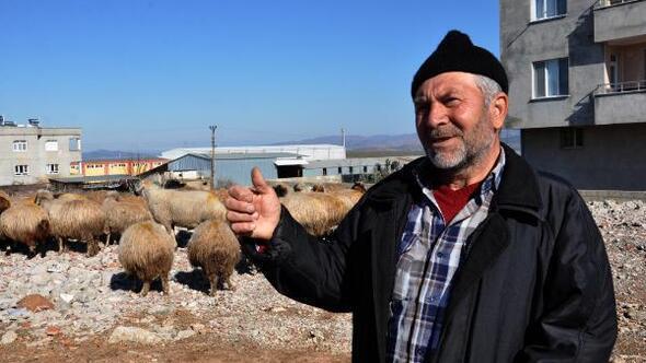 Koyun-keçi vebası rastlanan mahalle karantinaya alındı