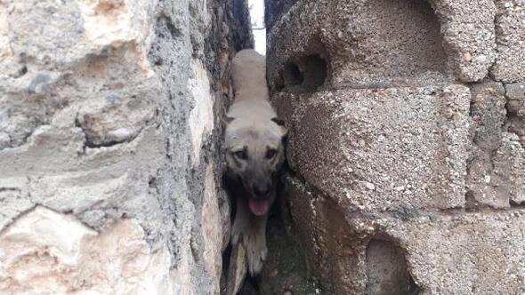 İki duvar arasına sıkışan köpeği, köylüler kurtardı
