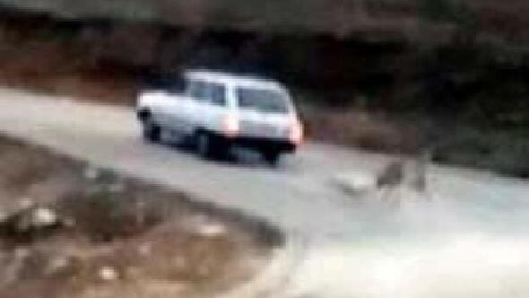 Köpeğini otomobile zincirle bağlayarak sürükledi