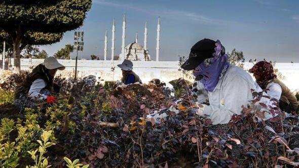 Adanada parklarda çiçeklendirme çalışması