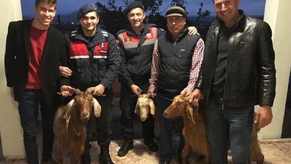 Çalınan keçileri jandarma buldu