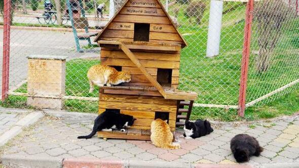 Kahramanmaraşta sokak kedileri ev sahibi oldu