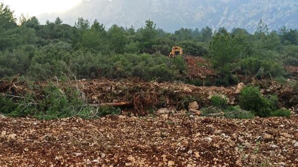 Orman envanterine zarar vermekten soruşturma başlatıldı