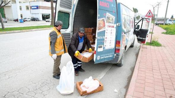 Seyhan Belediyesindensokak hayvanlarına yiyecek desteği