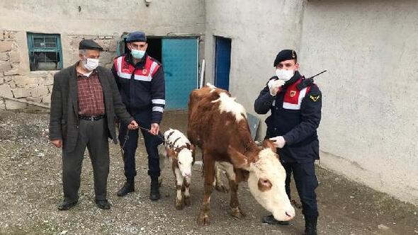 Sorgunda çalınan hayvanlar sahibine teslim edildi, 5 kişi gözaltına alındı