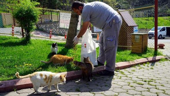 Kahramanmaraşta sokak hayvanları unutulmadı