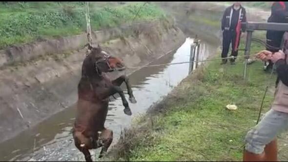 Sulama kanalına düşen atı itfaiye ekipleri kurtardı