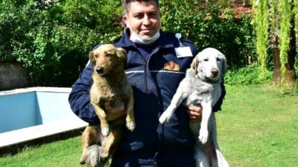 Kahraman itfaiyeci kurtardığı köpeklerle bir araya geldi