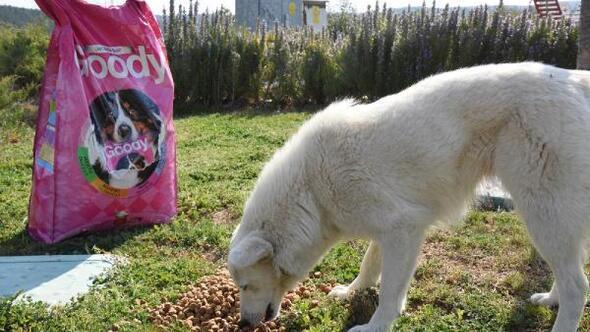 Belediye sokak hayvanlarına mama dağıtıyor