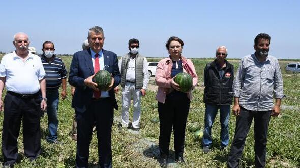Adanada karpuz hasadına hazırlıklar sürüyor