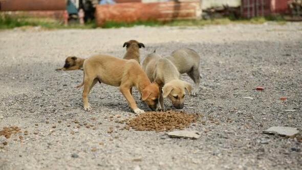 Adanada belediye ekipleri 500 noktada sokak hayvanlarını besliyor