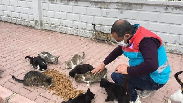 Kocasinan Belediyesi, sokak hayvanlarını unutmadı