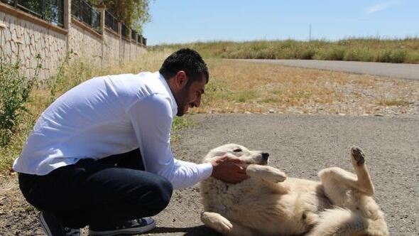 10 yıldır barınak yapıp, sokak hayvanlarını besliyor