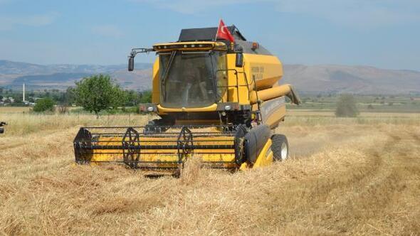 Hassada buğday hasadı başladı