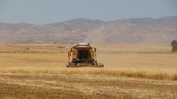 Cudi Dağı eteklerinde buğday ve arpa hasadı başladı