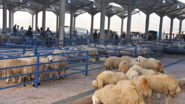 Niğde hayvan pazarı açıldı