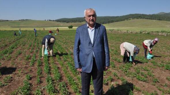 Tarım işçilerinin ücretleri belirlendi