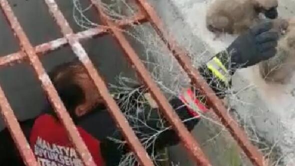 Menfeze düşen 4 yavru köpeği itfaiye kurtardı