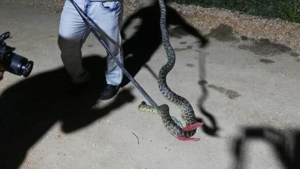 Kümeste yakalanan yılan doğal ortamına bırakıldı